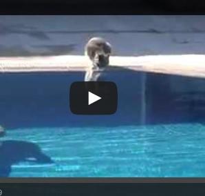 Chat et piscine ne font pas bon m nage for Grosse piscine gonflable
