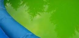 Algues dans la piscine