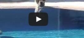 chat et piscine
